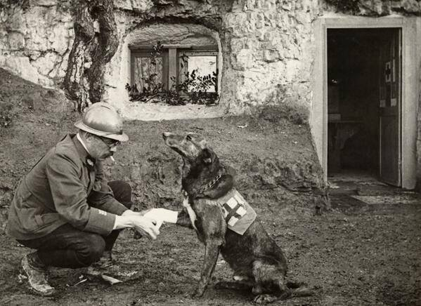 WW 1 RED CROSS  WAR DOG 1917
