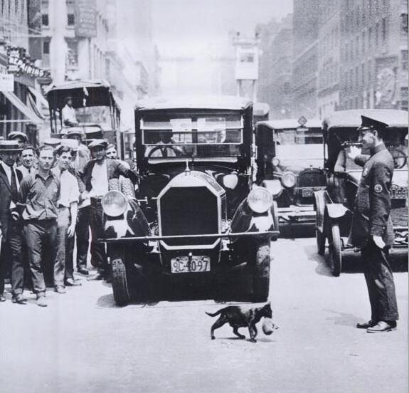 THE CAT AND NEW YORK CITY
